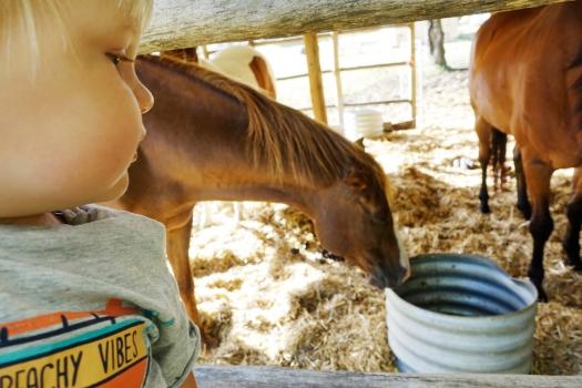 olle och hästarna